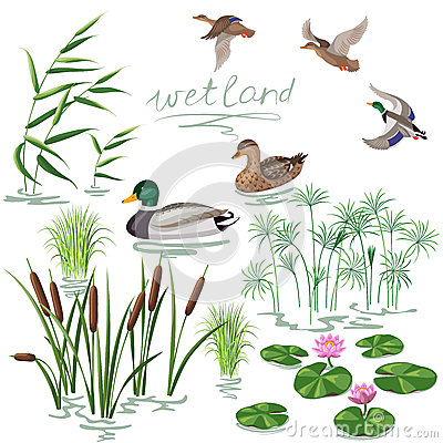 Wetland Plants Set Stock Vector.