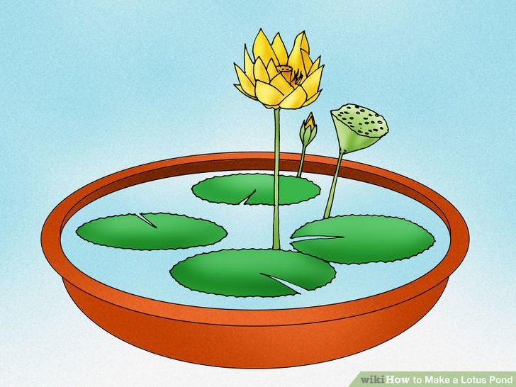 3 Ways to Make a Lotus Pond.