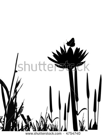 Cat Tail Plant Stock Photos, Royalty.