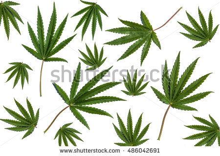 Set Wetland Plants Simplified Image Reed Stock Vector 252590158.