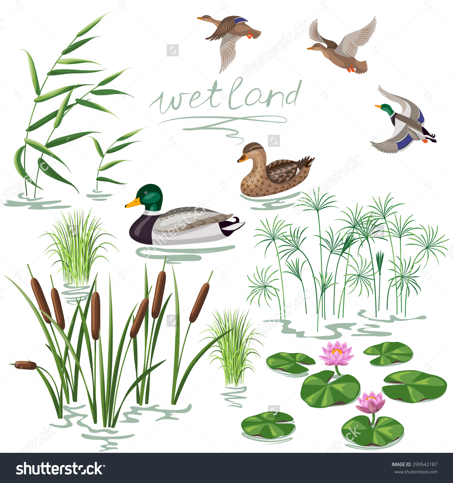 Set Wetland Plants Birds Simplified Image Stock Vector 299542187.