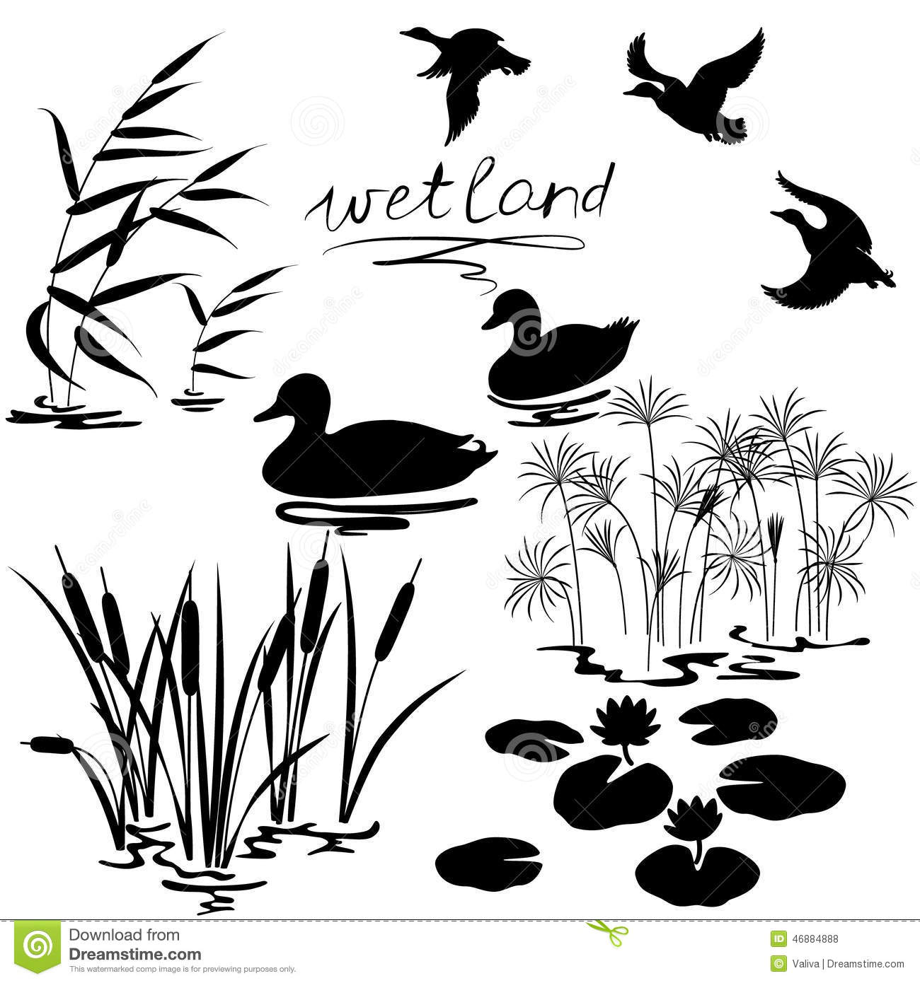 Bog Stock Illustrations.