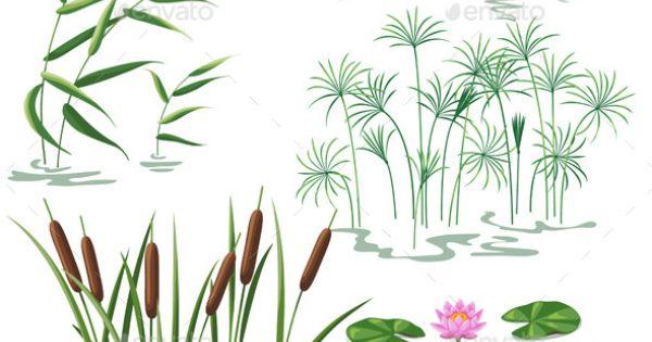 Wetland Plants Set.