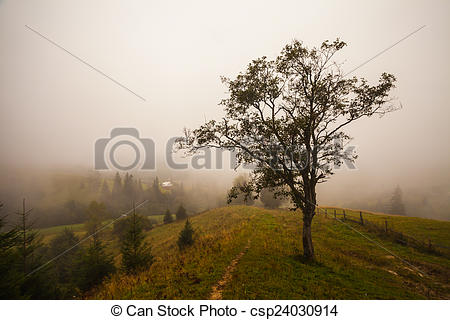 Clipart of Lonely tree on the hill, above the misty valley in.