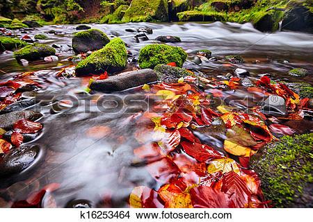 Stock Photo of river Kamenice in autumn, Bohemian Switzerland.