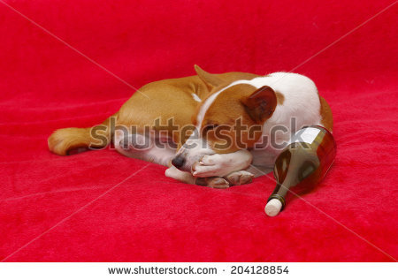 Bohemian Terrier Stock Photos, Royalty.