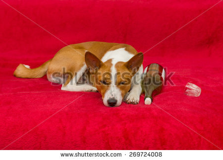Bohemian Terrier Stock Photos, Royalty.