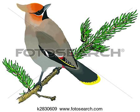 Stock Illustration of Bohemian Waxwing k2830609.
