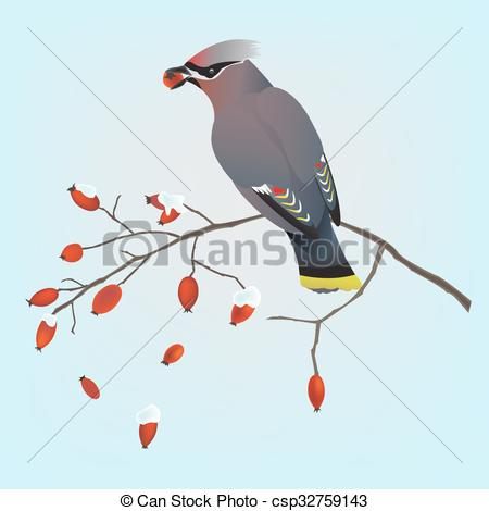 EPS Vector of Bohemian waxwing on a branch.