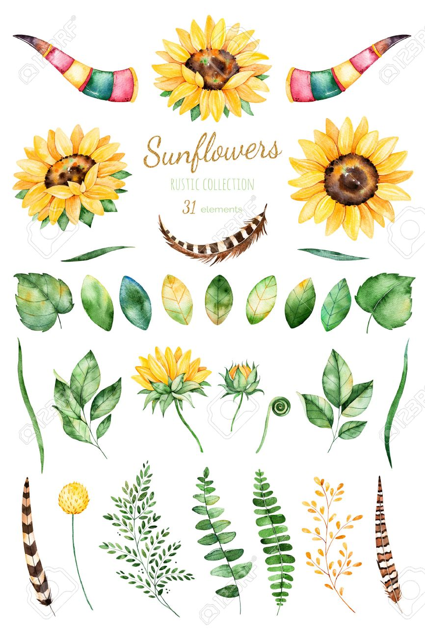 Handpainted watercolor sunflowers.31 clipart bright watercolor...