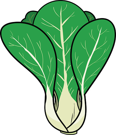 Bok choy clipart - Clipground