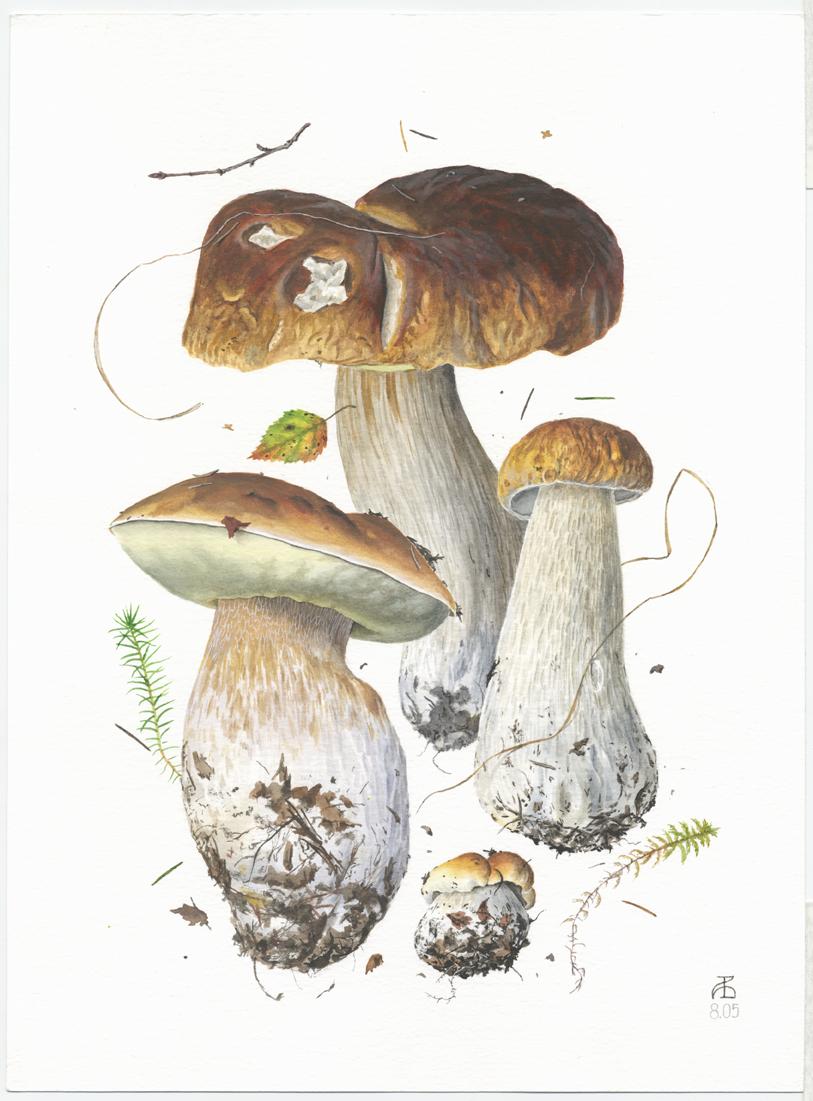 medicinal mushroom golden coral, ramaria aurea, vintage original.