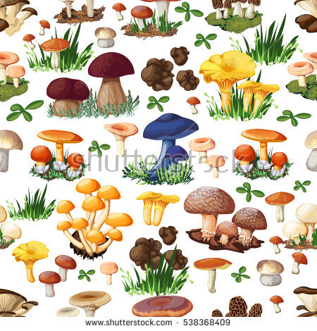 Suillus Stock Photos, Royalty.