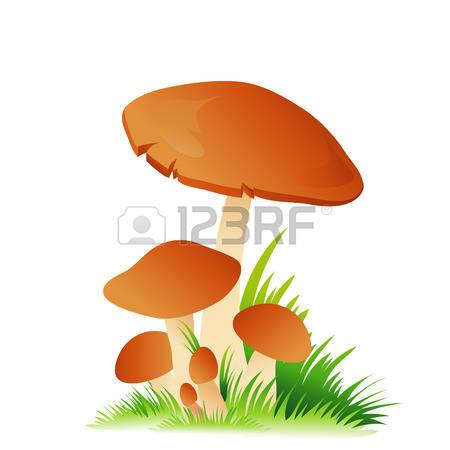524 Brown Cap Boletus Mushrooms Stock Vector Illustration And.