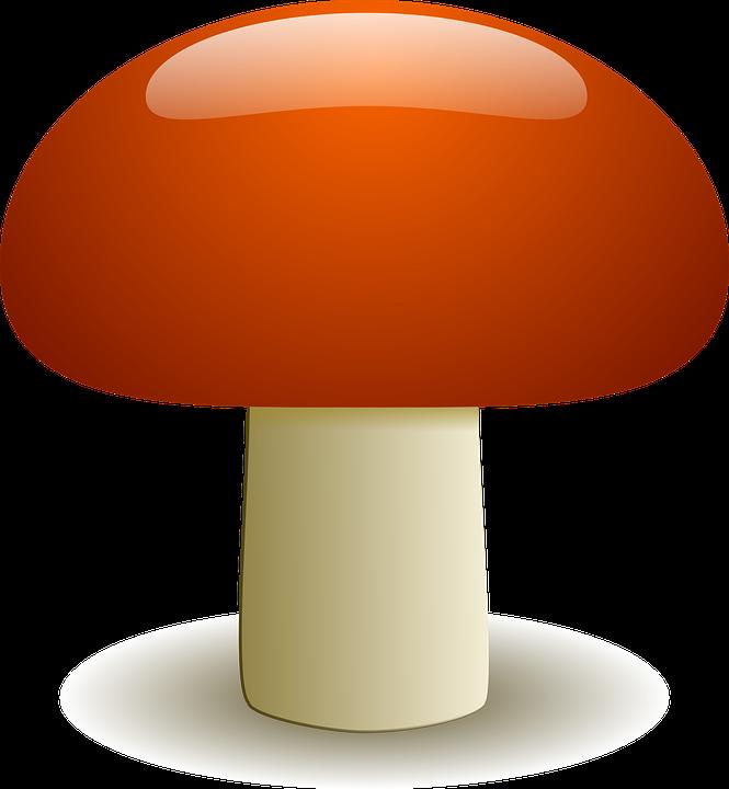 Free vector graphic: Mushroom, Fungus, Edible, Boletus.