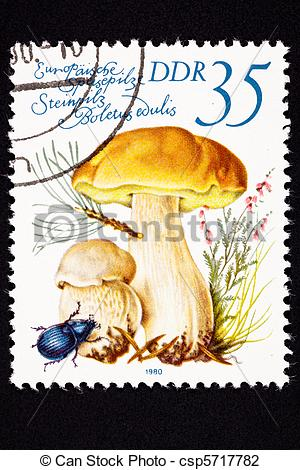 Clip Art of Edible Porcini mushroom, Boletus edulis. Also known as.