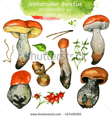 Watercolor Illustrations Mushrooms Stock Illustration 493504507.