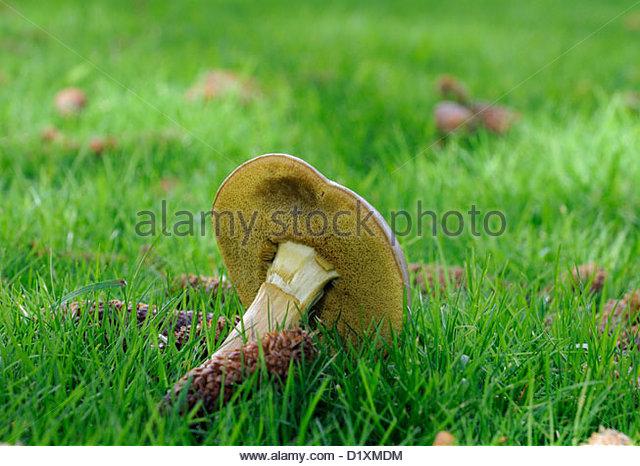 Mushroom Pores Stock Photos & Mushroom Pores Stock Images.