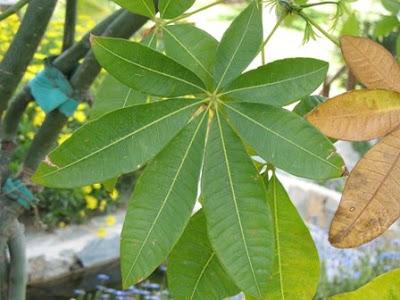 The World´s Tree Species: 2009.03.
