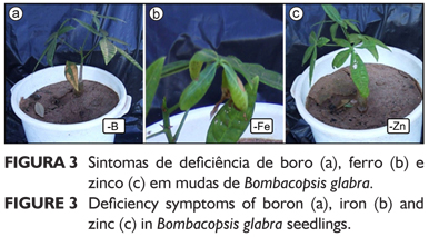 Visual diagnosis of deficiency of nutrients in Bombacopsis glabra.