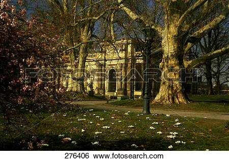 Stock Images of Trees in park, Bruhl Terrace, Dresden, Saxony.