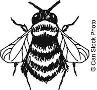 Bombus Illustrations and Clipart. 20 Bombus royalty free.