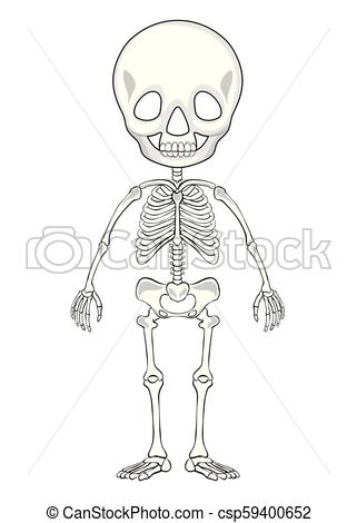Outline drawing of a human skeleton.