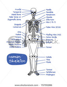Labeled Skeletal Structure.