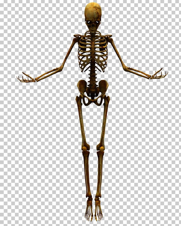 Human Skeleton Skull PNG, Clipart, Bone, Bone Dog, Bone Joints.