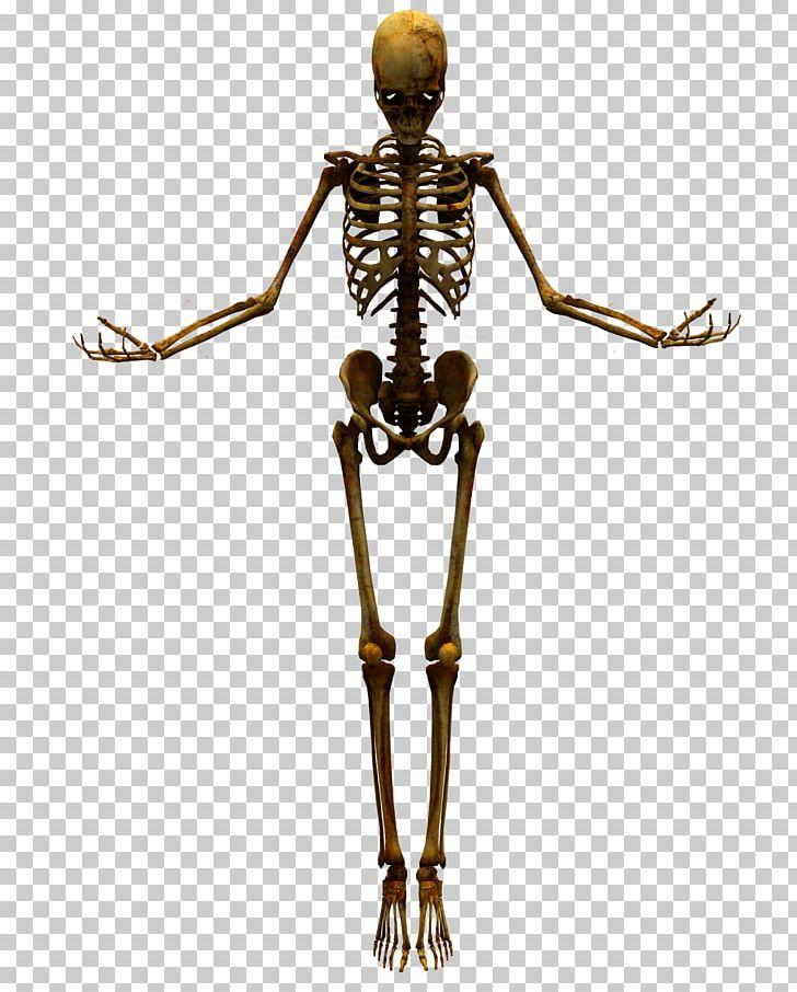 Human Skeleton Skull PNG, Clipart, Bone, Bone Dog, Bone Joints.