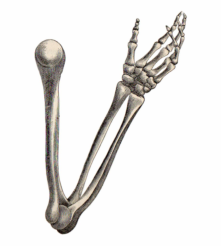 Skeleton Arm Png.
