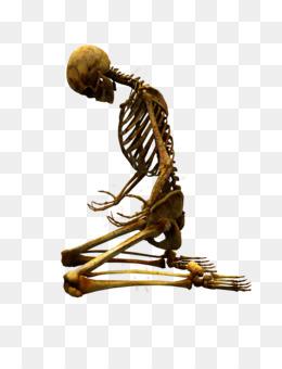 Human Bones PNG.