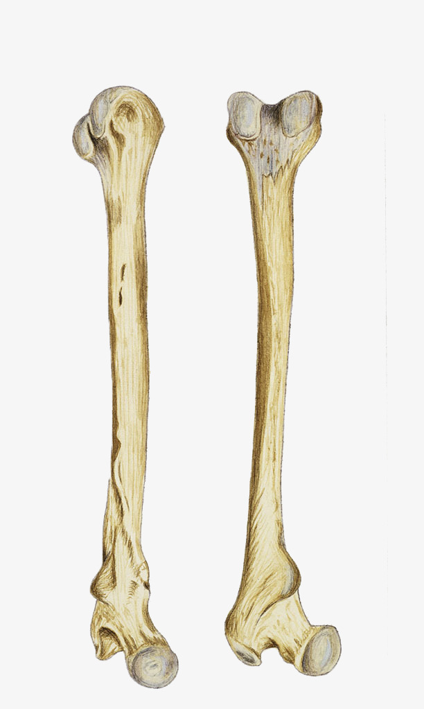 Bones Png (96+ Images In Collection) Pag #161391.