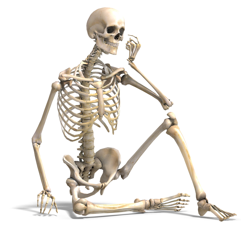 Skeletal System PNG HD Transparent Skeletal System HD.PNG Images.