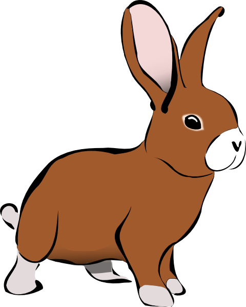 Bunny clipart transparent.