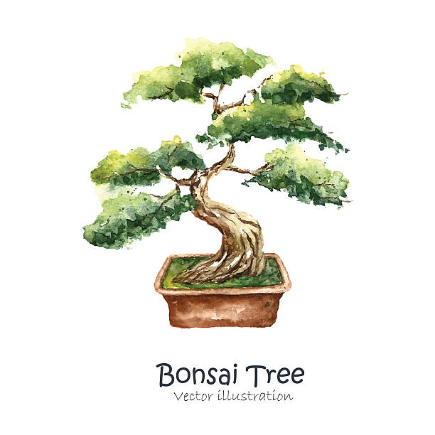 Best Bonsai Tree Illustrations, Royalty.