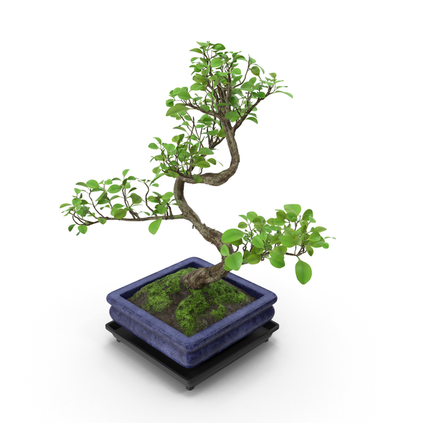 Bonsai Tree PNG Images & PSDs for Download.