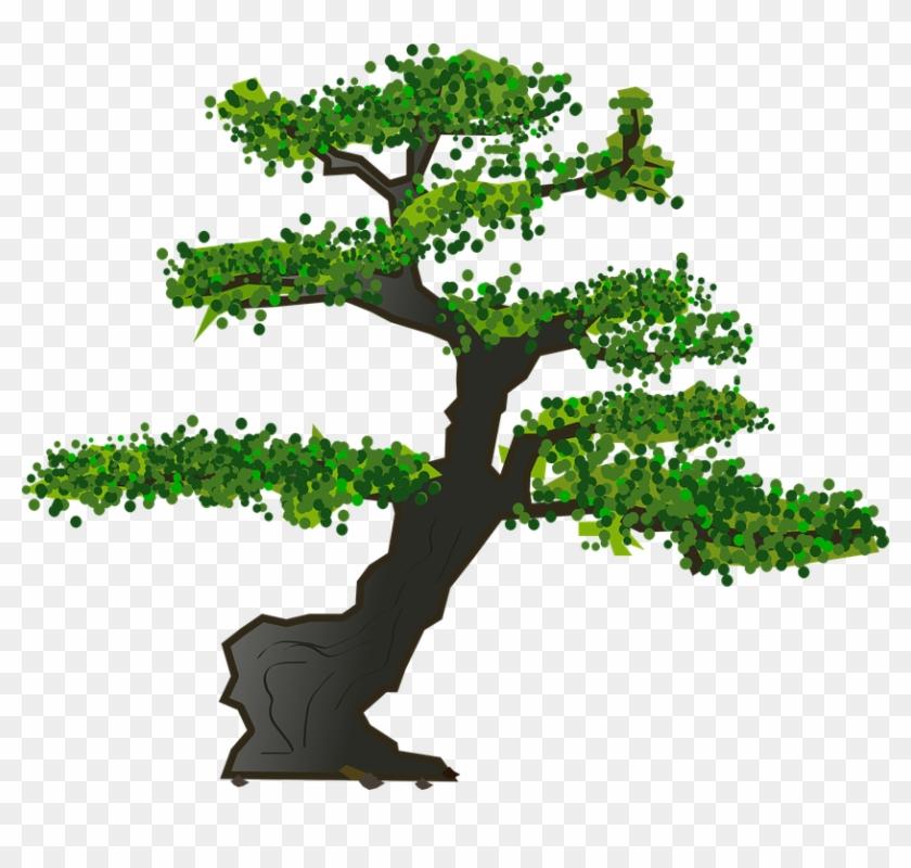 Bonsai, Tree, Leaves, Plant, Nature.