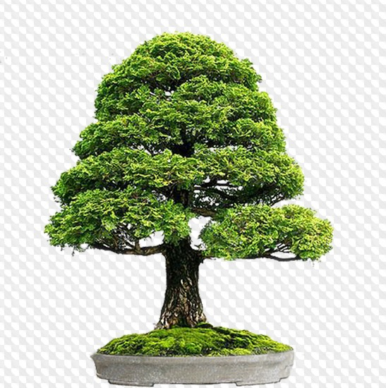 33 PSD, 33 PNG, bonsai tree in a pot, images with a transparent.