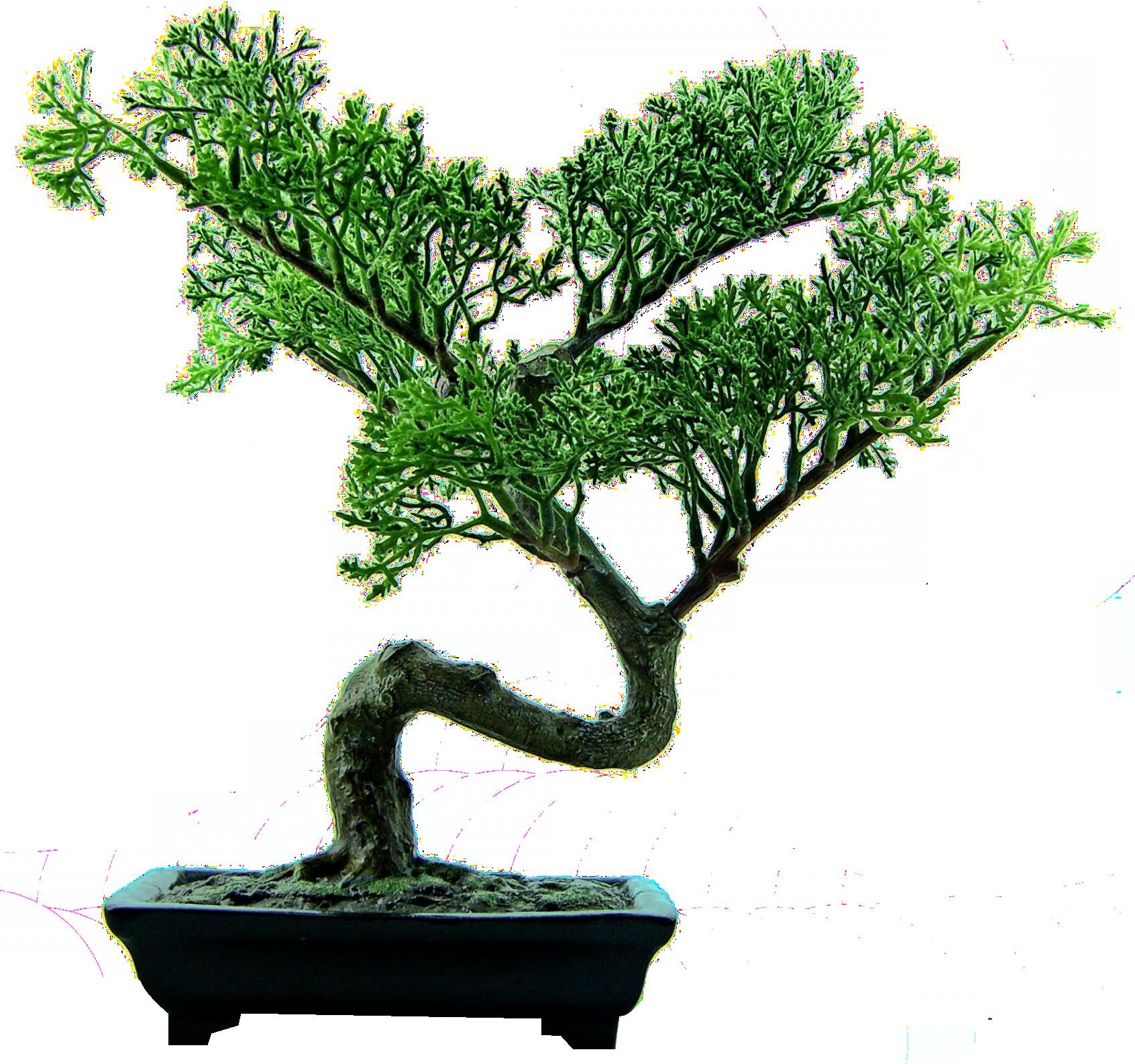 Bonsai Tree PNG Image.