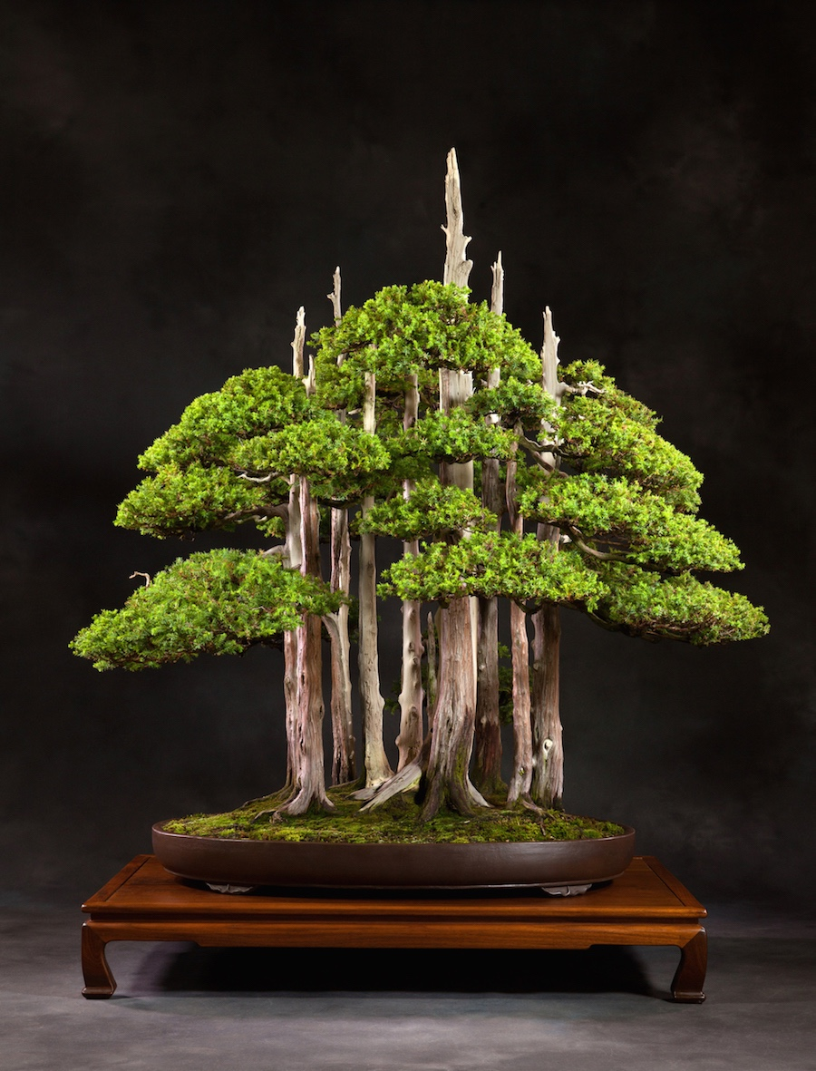 Choosing a Bonsai pot for your tree.
