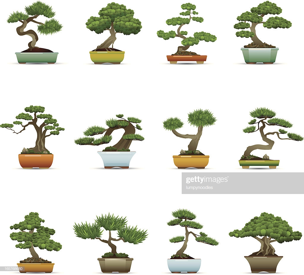 60 Top Bonsai Tree Stock Illustrations, Clip art, Cartoons, & Icons.