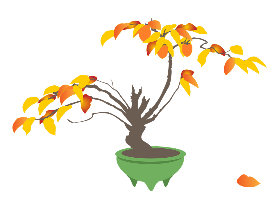 200+ Free Bonsai & Tree Images.