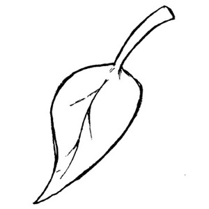 Fall Leaf Clipart Black And White.