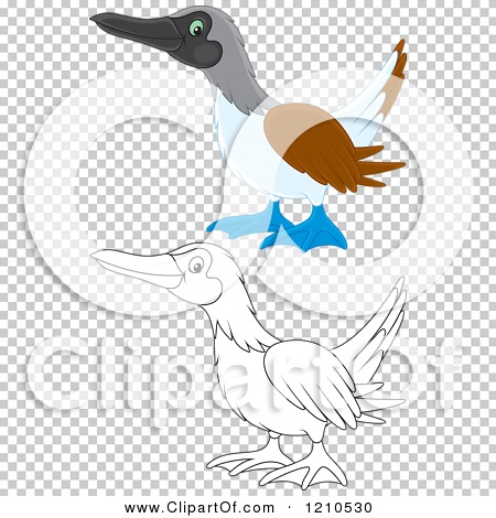 Cartoon of an Outlined and Colored Blue Footed Boobie Bird.