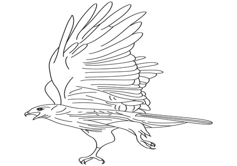 Black Hawk Coloring Pages coloring page, coloring image, clipart.
