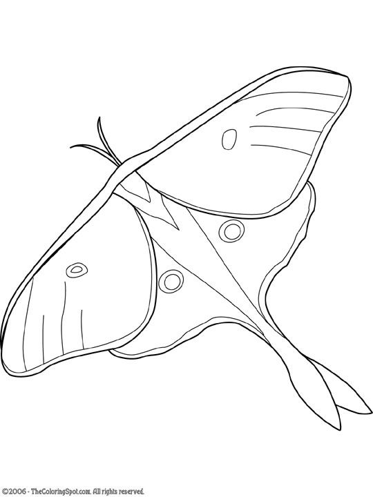 1000+ ideas about Luna Moth Symbolism on Pinterest.
