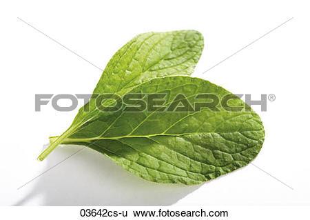 Stock Images of Borage, Burrage, Borago officinalis 03642cs.