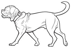 Dogue De Bordeaux Stock Illustrations.
