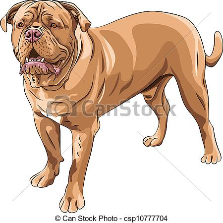 Vector Clipart of vector dog breed French Mastiff.